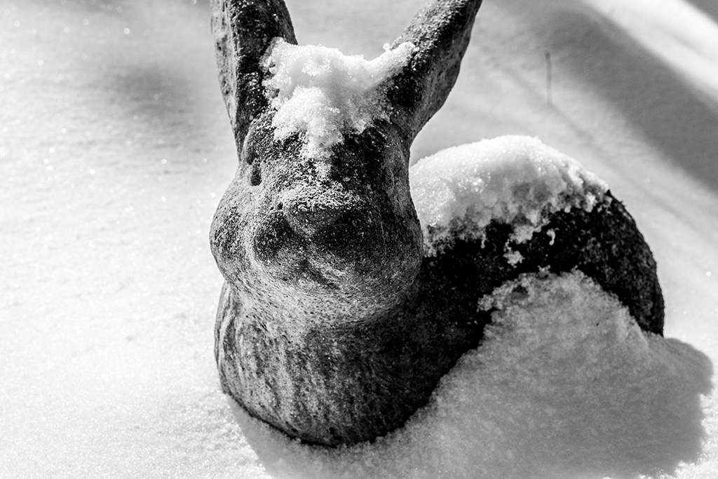 """This photo was taken as part of a series called """"Snowy Gardens."""" Created in my third semester at VCFA."""